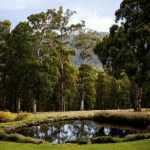 Payne's Hut by Lizzy C Photography the alpine open garden