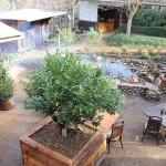 The Laurel 150x150 Tesss Winter Gardening Tips
